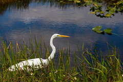 IMG_9912 ENP (JRCmoreno) Tags: winter grass florida swamp everglades evergladesnationalpark sabana