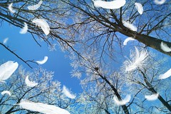 Fun stuff (CCphotoworks) Tags: trees winter weather feathers bluesky wintersky niceweather