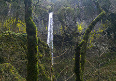 Elowah Falls (Ron Reason) Tags: winter green nature wet oregon forest point outdoors waterfall washington moss hiking scenic trails columbia lookout hike gorge wilderness elowah munra