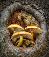 Baumhaus (Thomas Heuck) Tags: tree forest mushrooms natur pilze baum mritznationalpark