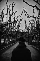 endavant... / keep going... (nuriapase) Tags: park parque people blackandwhite tree nature garden arbol persona jardin natura jordi edition arbre parc blancinegre monocrome jardi platjadaro edició