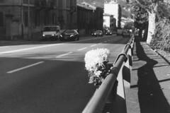 Andate piano ragazzi! (sirio174 (anche su Lomography)) Tags: auto flowers como car dead fiori caraccident incidente morti