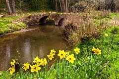 Pivany bridge over Leigh brook (Macro light) Tags: flowers water sunshine spring wildlife naturereserve trust worcestershire daffodils leighbrook theknapp