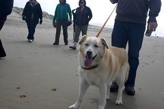 All Photos-9303 (jlh_lunasea) Tags: dog beach romeo manzanita huskador