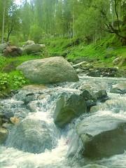 Life & Nature in Nagar Valley, Gilgit-Baltistan, Pakistan (nasar.ullah5) Tags: life flowers trees pakistan lake mountains nature karakoram himalayas nagarvalley gilgitbaltistan