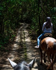 It was a couple steep miles down to where the treehouse was so we decided to take horses back up. #theworldwalk #travel #colombia