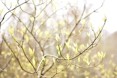 Candle in the wind (Lesley-Anne Murray) Tags: tree yellow woodland scotland spring nikon candle dof wind d90 scottishspring lesleyannemurray