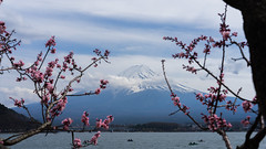 (lublud) Tags: sky lake snow tree japan clouds spring asia fuji mountfuji  cherryblossom  sakura fujisan  kawaguchiko