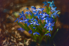 (kinga.lubawa) Tags: flowers flower colors canon pentacon kwiaty kwiat kolory kolorowe canon6d