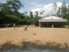 RIMG1109 (WorkingVillages) Tags: congo ruzizi wvi southkivu workingvillages