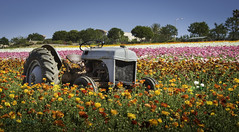The Machine (paperacid3) Tags: flowers tractor flower colors composition landscape nikon wheels blossoms bloom carlsbad flowerfields d800 lightroom flickrexplore beautifulcapture