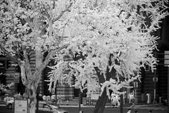 DSC01328 (zkj102) Tags: city tree rain ir 3d cityscape shanghai stereo infrared htconex