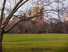 Spring Emerges-Sheep Meadow-Central Park (moelynphotos) Tags: park newyorkcity trees urban march spring skyscrapers centralpark blossoms sheepmeadow citiscape famousplace seasonalchanges moelynphotos