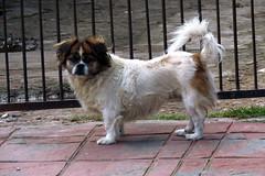 En la calle. (jagar41_ Juan Antonio) Tags: animal perro perros animales mascotas