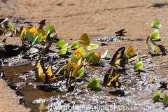 Argentinien_Insekten-71 (fotolulu2012) Tags: tierfoto