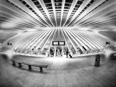 at the platform (zuiko12) Tags: blackandwhite bw prime streetphotography olympus 8mm zuiko omd em1 club16 mzuiko