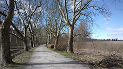 Tree-lined lakeside path (hugovk) Tags: cameraphone germany march nokia spring path lakeside hvk constance treelined badenwurttemberg carlzeiss 2016 808 kevt litzelstetten geo:country=germany hugovk camera:make=nokia pureview exif:flash=offdidnotfire exif:exposure=1100 exif:aperture=24 nokia808pureview exif:orientation=horizontalnormal camera:model=808pureview uploaded:by=email exif:exposurebias=0 exif:focallength=80mm exif:isospeed=64 geo:county=constance geo:region=badenwurttemberg meta:exif=1461729679 geo:locality=litzelstetten treelinedlakesidepath