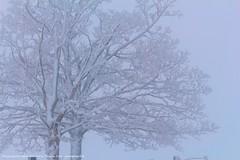 (planetphoto.fr.ht) Tags: blue winter white snow green ice nature monochrome switzerland la suisse natural hiver natur natura vert jura bosque neige extrieur arbre blanc gel froid fort sapin glace neiges bosques snows aventure hauteur pananorama greatnature epine congre arbes sagne switzera