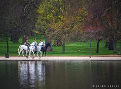 Morning Walk (James Neeley) Tags: horses london hydepark serpentine jamesneeley