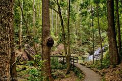 Kondalilla National park, Picnic creek (Tatters ) Tags: bridge waterfall rainforest path australia bushwalking sunshinecoasthinterland kondalillanationalpark