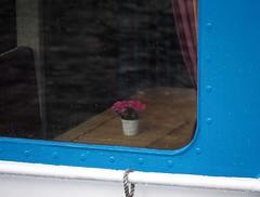 kiel_blumenboot (ghoermann) Tags: ferry kiel kvg
