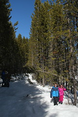 Olsen and Jovie in the narrow trees 1 (Aggiewelshes) Tags: travel winter snow april snowshoeing wyoming olsen jacksonhole colterbay jovie grandtetonnationalpark 2016 gtnp