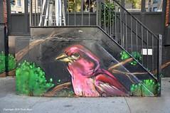 House Finch (Trish Mayo) Tags: bird mural wallart housefinch washingtonheights thebestofday gnneniyisi taszo audubonmuralproject taszocoffeeshop