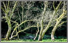 eyewitnesses (Fay2603) Tags: wood old trees light plants green nature leaves forest outdoor logs frame landschaft wald snags garten beech fotorahmen fujixe1
