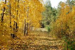 DSC_6025 (Rustam Bikbov) Tags: autumn september 2012    sverdlovskoblast