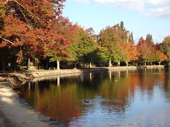 A splash of colour (Karen Pincott) Tags: autumn trees newzealand lake water roadtrip duckpond masterton wairarapa deciduoustrees endoftheday