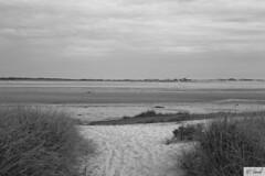 Nature (Marie-Claude Hamel) Tags: usa beach capecod massachusetts approved plage tatsunis