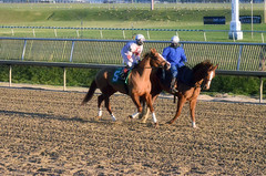 2016-01-03 (95) r9 Caitlyn Stoddard on #5 Tough Weather (JLeeFleenor) Tags: horses caballo cheval photography md photos uma maryland cal jockey chestnut jinete cavallo cavalo pferd equestrian kuda alogo equine hest thoroughbreds soos hevonen cuddy paard cavall kon koin laurelpark  jokey fantino hst ceffyl  jquei  ko faras hestur  perd femaleathletes ngi  konj    capall beygir yarraman dokej femalejockey rennreiter  pfeerd marylandhorseracing marylandracing   okej kilparatsastaja jocheu