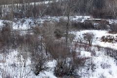A footbridge across Beaver Creek (Jim 03) Tags: grass creek river centre conservation jim beaver valley short 1984 area prairie saskatchewan meewasin 1979 sites microcosm interpretive uncultivated jimhoffman jhoffman jim03 wwwflickrcomphotosjhoffman2013 wwwjimahoffmancom