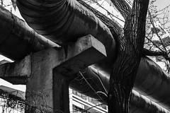 Plasticity (avellium) Tags: urban tree pipes concept plasticity
