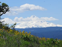Mount Hood from Tom McCall Point Trail (JM1Kendall) Tags: oregon hiking wildflowers mounthood tommccall rowenacrest springqtr sx50