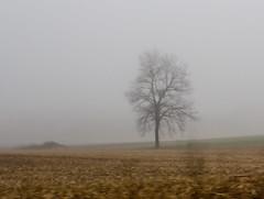 Out My Window, April Fog (marylea) Tags: morning mist tree fog foggy commute lonetree 2016 apr11
