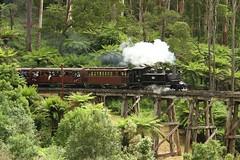 Puffing Billy Trestle bridge (Aussie foamer) Tags: train railway victoria locomotive preserved belgrave steamlocomotive puffingbilly 8a trestlebridge touristrailway