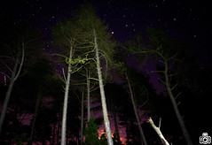 The trees at night (TimPockney) Tags: trees sky colour nature night stars astro astrophotography
