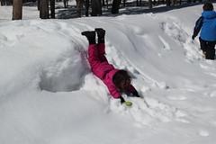 Jovie faceplanting in the snow (Aggiewelshes) Tags: travel winter snow april wyoming olsen jacksonhole colterbay jovie grandtetonnationalpark 2016 gtnp