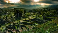 rice magic (mikedeclerck) Tags: light bali sun sunlight nature clouds canon landscape rice magic ubud lightroom naturelovers natgeo landshape 700d jatiluweh natgeotravel