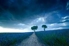 Negros nubarrones ensombrecen nuestras vidas (Carlos Javier Pérez) Tags: naturaleza clouds landscape paisaje nubes tormenta optimismo esperanza futuro lavanda largaexposición espliego bigstopper filtroslee negrosnubarrones