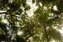 Green! (Rafee Mizan Khan Chowdhury Niloy) Tags: people nature canon garden botanical zoo wildlife photowalk dhaka mirpur 70d