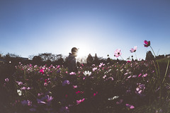 (another side view) Tags: flowers boy sunlight fish man flower male nature sunshine silhouette nikon shine natural sigma fisheye shining 15mm cosmos naturallighting   naturelight  naturalism  naturepeople    nikondf
