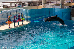 120810 Enoshima Aquarium-05.jpg (Bruce Batten) Tags: locations kanagawa mammals people subjects enoshima aquariums animals kamakura marine japan vertebrates fujisawashi kanagawaken jp honshu