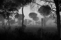 El Roco (Marina Ferrer) Tags: arboles paisaje niebla tenebre