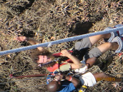 Zimbabwe (572) (Absolute Africa 17/09/2015 Overlanding Tour) Tags: africa2015