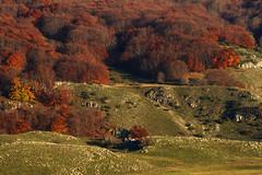 Ovindoli (Antonio Vaccarini (vanto5)) Tags: travel autumn sunset italy mountain woods italia tramonto autunno montagna beech abruzzo bosco laquila faggio beeches appennini apennines ovindoli faggi canonef70300mmf456isusm canoneos7d parcoregionalesirentevelino antoniovaccarini