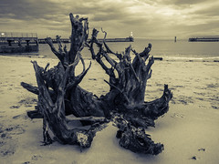 Blyth Harbour (L2L Shadowcatcher) Tags: tree beach landscape harbour blyth splittone nortghumberland