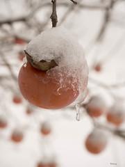 Frozen Kaki (Ramy.) Tags: lebanon white snow macro fruit four cuatro lumix frozen nieve fruta micro neige helado liban thirds kaki diospyros lbano m43 tercios leicadgmacroelmarit45mmf28 mirorless kfertay dmcgx7