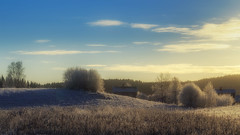Frostscape (PixPep) Tags: trees winter sky nature frozen frost sweden bluesky winterlandscape arvika mangskog pixpep